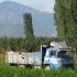 Harvest Season In Turkey