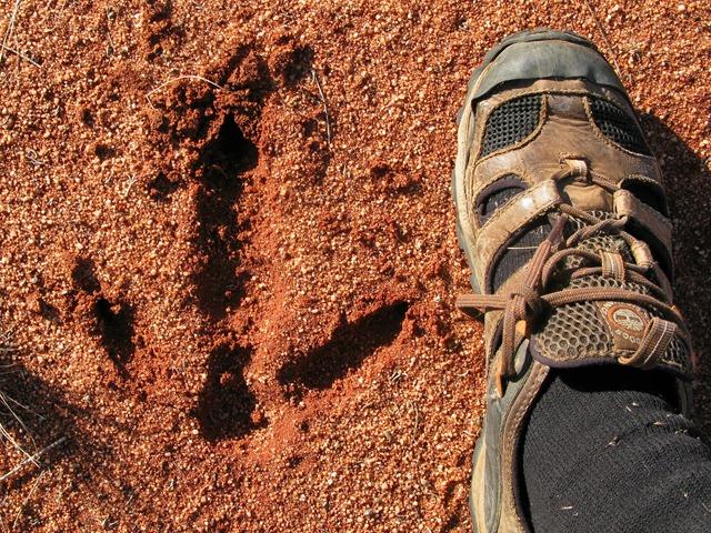 Emu footprints
