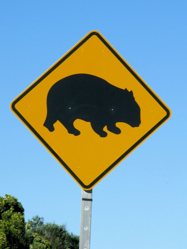 Watch Out For Wombats