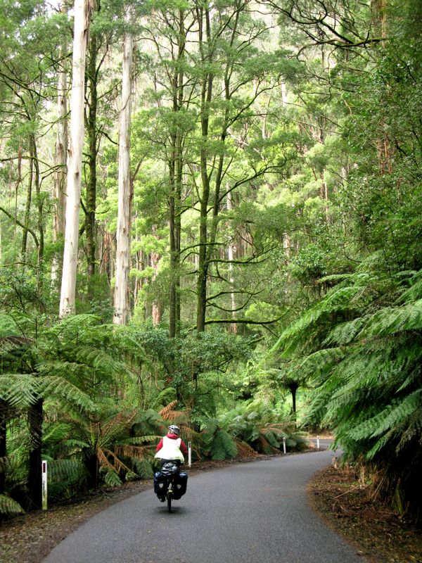 Turtons Track In The Otway Ranges