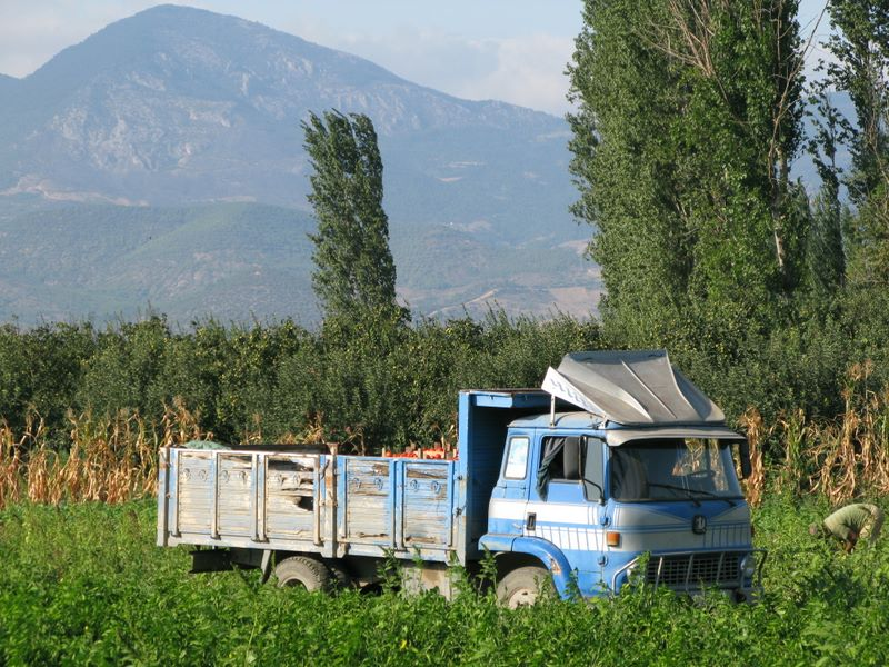 Harvest Season In Turkey