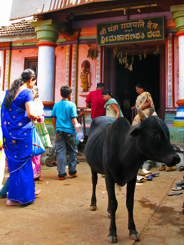Temple Access Is For Hindus And Cows Only